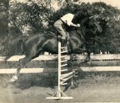 Faylese Scharff Jumping Horse.jpg